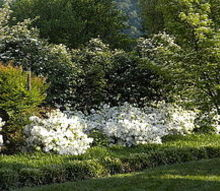 landscape lessons learned and pitfalls to avoid, concrete masonry, flowers, gardening, home improvement, landscape, perennial