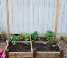 old bed frame repurposed as a raised garden bed, gardening, raised garden beds, repurposing upcycling, woodworking projects, A few 2x4 s and a garden net create a nice climbing trellis for the string beans and contain the tomatoes