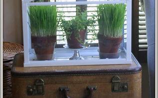cultivating wheat grass, gardening, terrarium, Easy to grow wheat grass looks perfect in Ikea s mini terrarium