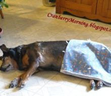 old dogs dog food dog comfort, pets animals, Snug as a bug Dog nap
