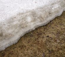 winter s harsh temps leaving your lawn frightful, landscape, Snow Mold on Your Lawn