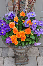 traditional garden urns and contemporary containers, container gardening, flowers, gardening, perennials