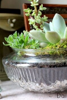diy succulent garden, flowers, gardening, succulents, terrarium