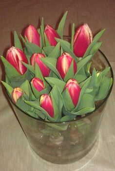is this the coolest or what, flowers, gardening, indoor tulips It s my sunshine on a cloudy day