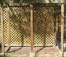 we recently cut back some wisteria that was growing on our pergola although it s, gardening, Wisteria invasion