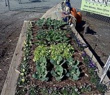 my square foot garden display cabbage lettuce broccoli cauliflower brussel, gardening