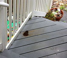 bear poop on my deck stairs