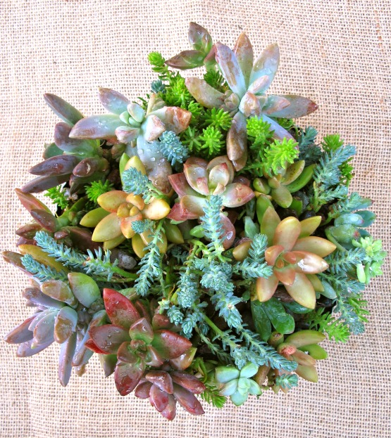 Succulent Dish Garden Ideas the decorated house how to create a succulent dish garden tutorial Diy Succulent Dish Garden Repurpose Crafts Flowers Gardening Succulents