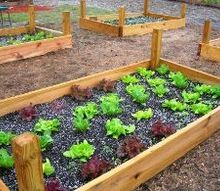 how to build raised beds, gardening, raised garden beds, Raised bed planted with a variety of lettuces