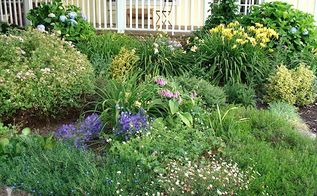 cottage garden flowers, flowers, gardening, outdoor living, Freshly trimmed front border with hydrangeas spirea fleabane a mystery purple blooming bulb and more daylilies