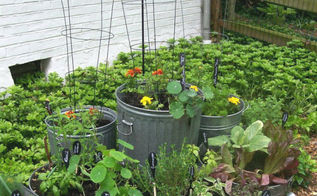 the garden charmers love companion planting, container gardening, flowers, gardening, perennials, raised garden beds