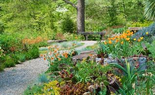 chanticleer s gravel garden in spring, gardening, landscape, Punches of orange are just the thing here using California poppies Eschscholzia californica and hardy Geums Sedums galore on the rock wall and a Beavertail cactus Opuntia basilaris var basilaris just coming in bloom too