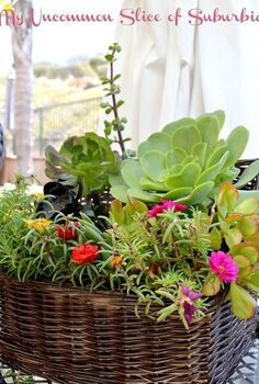 turn a old basket into a basket full of succulents, flowers, gardening, repurposing upcycling, succulents