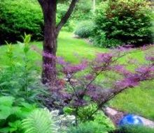 into my garden, gardening, Semi Shade bed with Japanese Maple