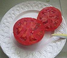 tomato, gardening