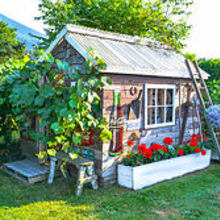 a happy grapevine accident story worth telling, garages, gardening, outdoor living, repurposing upcycling, My cute little rustic garden shed is wearing a new outfit this summer The grapevine has taken over and I couldn t be more pleased