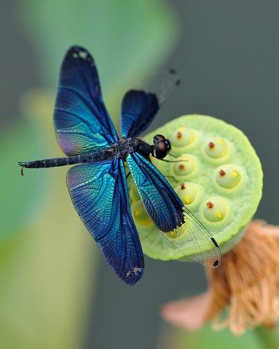 More Dragonflies Hometalk