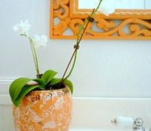 my tangerine ceiling a powder room makeover with a pop of color, bathroom ideas, home decor, Tangerine mirror anyone I painted over an old mirror with this fresh color for a whole new look