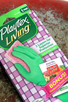 can someone give me a hand, gardening, succulents, I used Playtex gloves as my mold