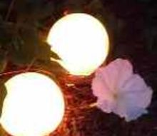 lighted garden globes with moon flower vine, flowers, gardening, lighting, Lighted garden globes and moon flower vine