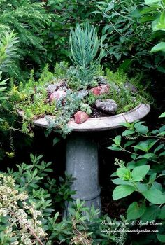 fairy garden in a broken or cracked fountain an idea worth saving, flowers, gardening, succulents, Barb Rosen s succulent filled birdbath