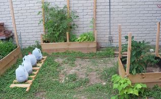 my inexpensive space limited apartment dweller garden, diy, flowers, gardening, how to, raised garden beds, urban living, Growing