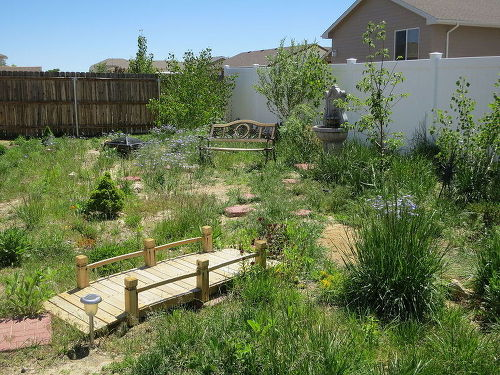 Need help with landscaping design ideas - Zone 8 and lots ...