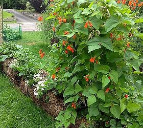 Following Up On Straw Bale Gardening, Gardening, More Shots Of The Garden  In August