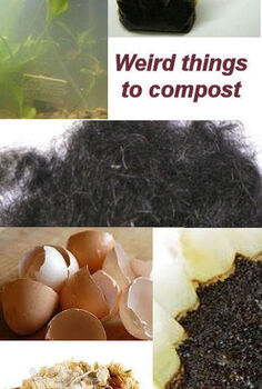 weird things that you can compost, gardening, homesteading