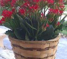 q mystery beauty, gardening