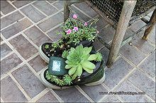 using boots for growing succulents, flowers, gardening, repurposing upcycling, succulents, The hen and chick succulents stay in the boot in the winter when it s moved inside the barn and come back to life with sunshine and water I found all this out because I was too lazy to remove the poor plants one winter