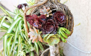 bird house and how to make a succulent nest, flowers, gardening, outdoor living, succulents