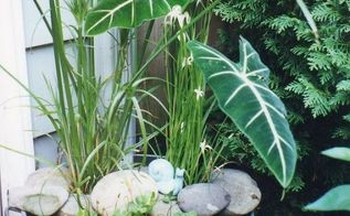 diy create your own water garden in a container, container gardening, flowers, gardening, outdoor living, ponds water features, My galvanized tub water garden
