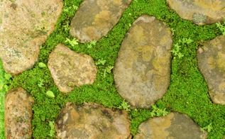 diy a charming stone and moss walkway, concrete masonry, gardening