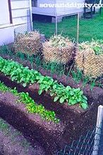 easiest potato growing method ever, gardening, Last years towers with gourmet purple potato s
