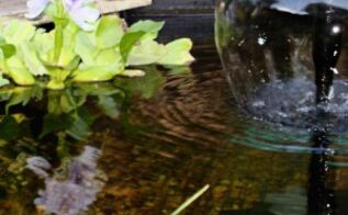 10 aquatic plants for your fountain free floating flowers greenery, flowers, gardening, ponds water features