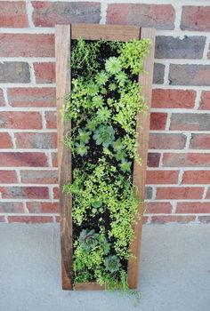 hanging succulent garden, flowers, gardening, succulents