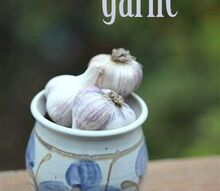 how to grow garlic, gardening
