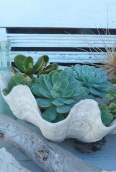 succulent beach shells, flowers, gardening, succulents