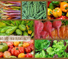 what are you planting, container gardening, gardening, Beets Carrots Peppers Squash Zucchini Tomatoes Lettuce Herbs Arugula SweetPeas Kohlrabi Cucumber Okra Corn Broccoli Cabbage Turnips WhoEvenEatsTurnips