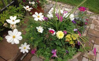 spring bloomers, flowers, gardening