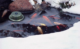 10 tips for preparing your pond for the winter, outdoor living, perennial, ponds water features, Tip 7 If you live in the north where temps are extreme add a floating heater to keep the surface from freezing over They have a built in thermostat and turn on and off when needed