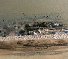 q water damage and mold, home maintenance repairs, Behind the base board