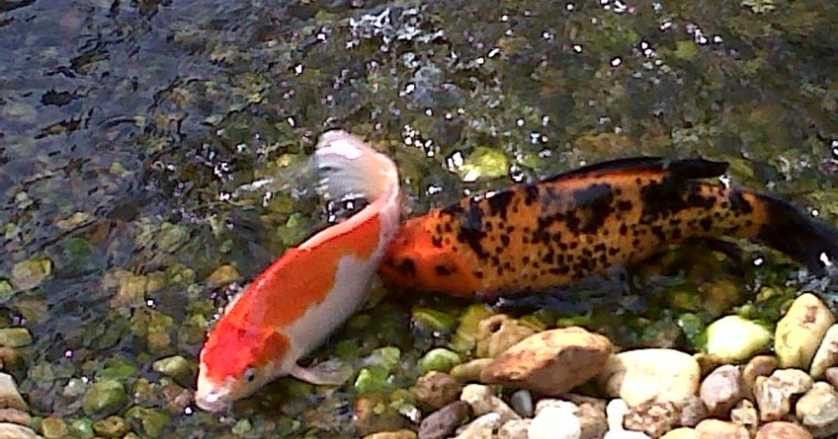 Fish out of the water. : Hometalk