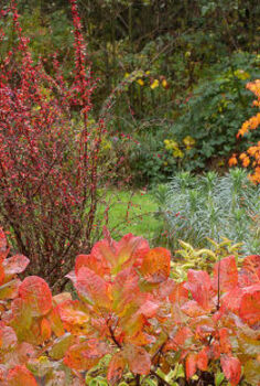 foliage plant combinations forget the flowers, flowers, gardening