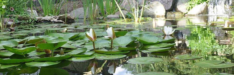 Ponds Inc. of Illinois, Jason Lenox cover photo