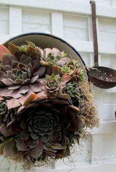 our summer potting sink, flowers, gardening, outdoor living, succulents, Succulent in a vintage colander