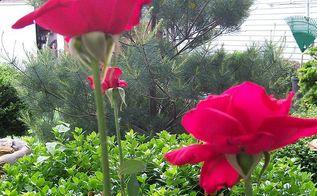summer yard 2014, gardening, outdoor living