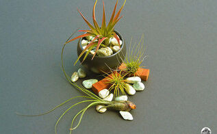 air plants the nearly indestructible house plant, gardening, home decor