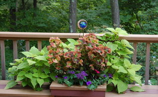 container plants that last till frost, container gardening, flowers, gardening, hibiscus, A little garden art